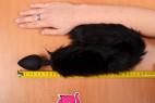 Sada Pussycat - meriame dĺžku kolíka s chvostíkom